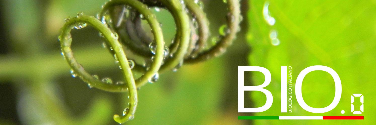 biozeroslide
